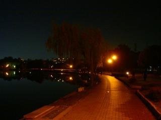 夜の大濠公園